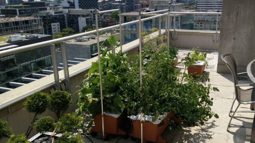 apartment gardening