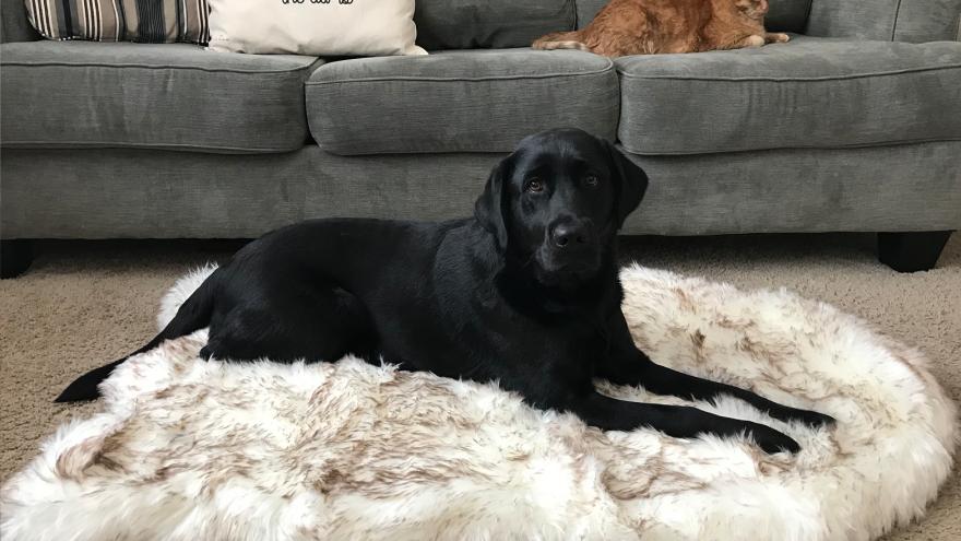 best carpets for pets