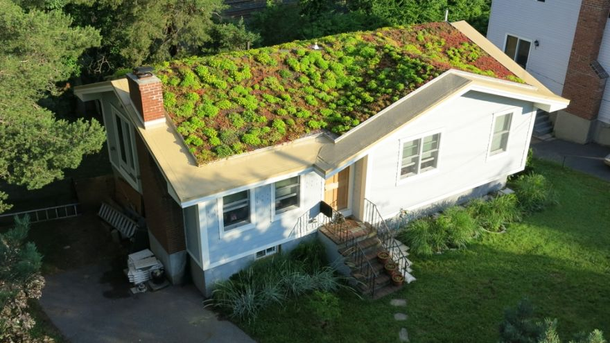 Green Roofing a House