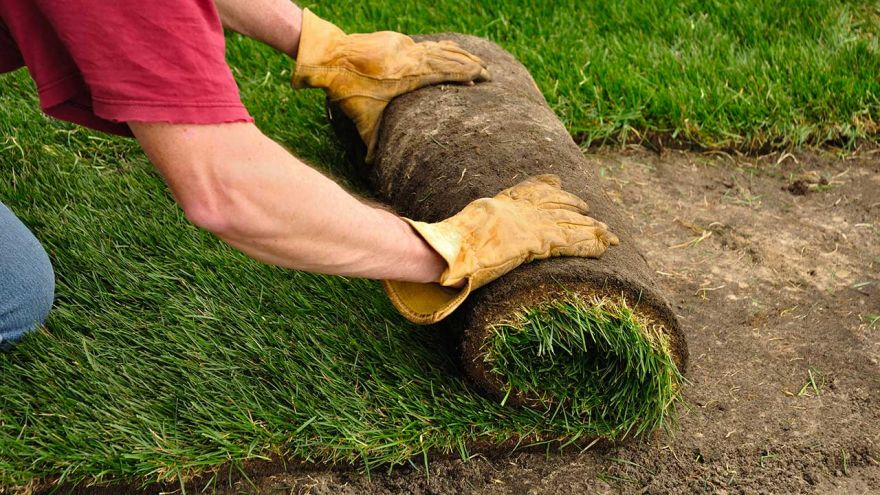 how much does sod cost