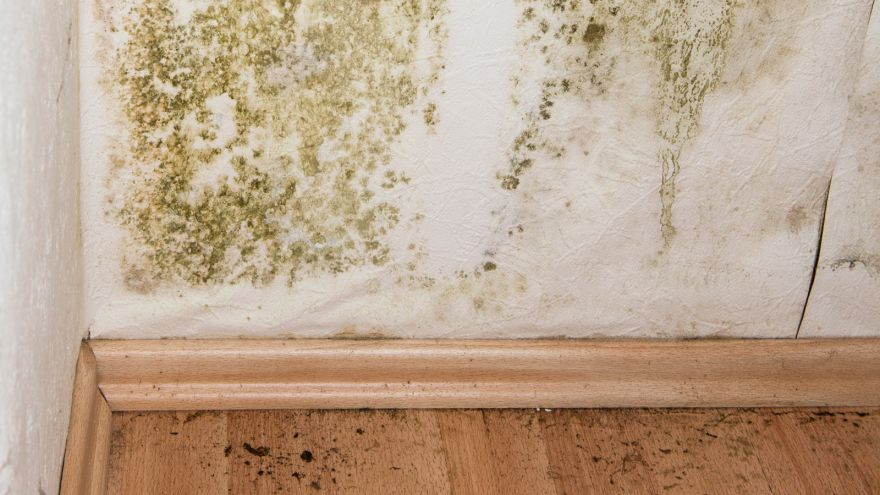 mold removing products