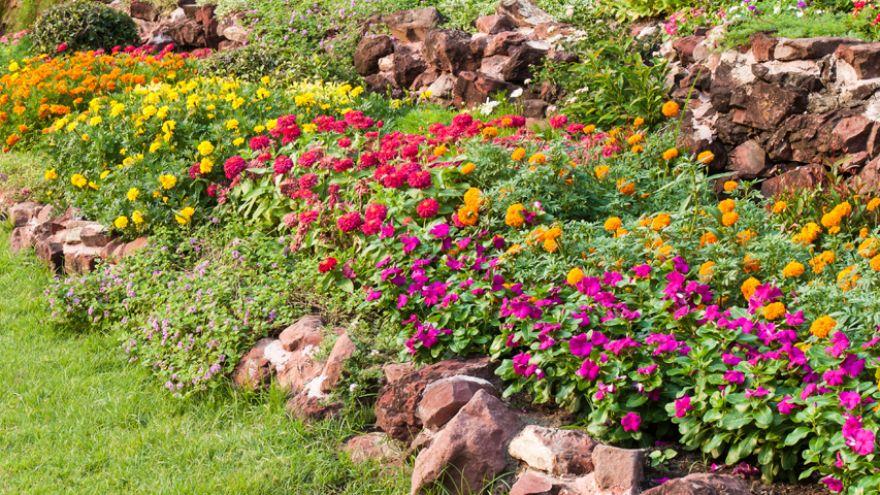 plants that repel mosqutioes