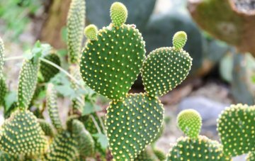 Types of Cactus Plants & How to Properly Care for One